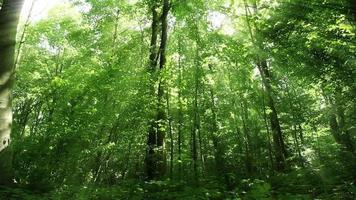 bosque verde durante la primavera