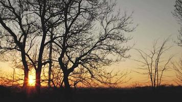 Silhouettes of trees at a sunset video