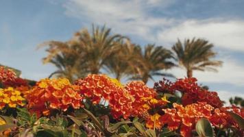 Tropical Orange flowers