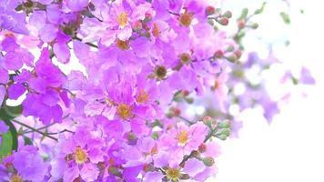 fiore rosa sboccia nel giardino