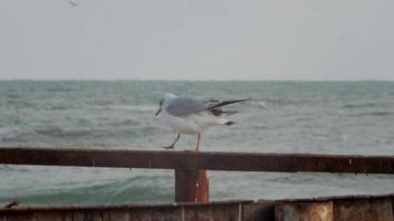 une mouette sur une construction rouillée au bord de la mer