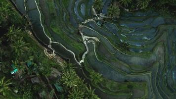 Aerial View on Tegalalang Rice Terrace, Bali