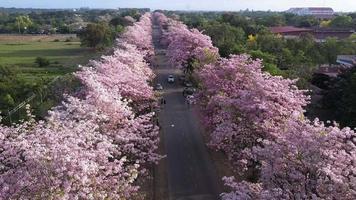 Couloir rose à Kamphangsean, Nakornpathom, Thaïlande