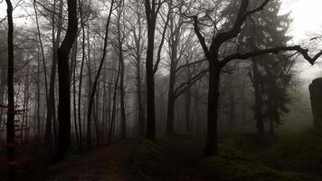 Dark Forest and Castle in Misty Foggy Day