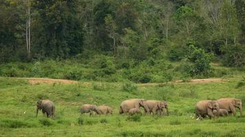 elefantes no parque nacional kui buri, tailândia video