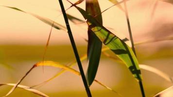folhas balançando ao vento durante o pôr do sol video