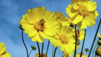 Una abeja alimentándose de una flor amarilla de punta ordenada