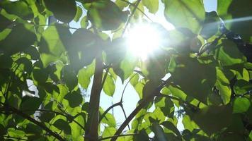 a visão brilhante do sol sob as folhas verdes