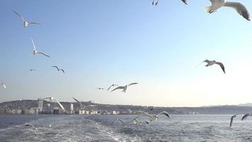 bando de gaivotas voando sobre o mar na cidade portuária video