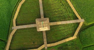 vue aérienne sur une rizière. carte de la ferme de riz 4k dci video