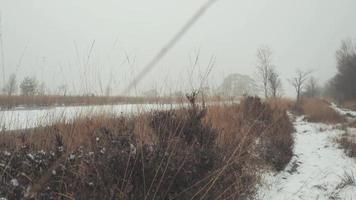 ein kalter Tag in einer Winterlandschaft, Niederlande. video