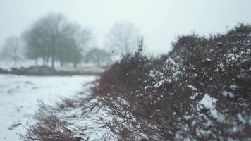 petits buissons dans un paysage enneigé