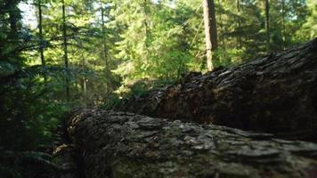 troncos acostados en medio del bosque