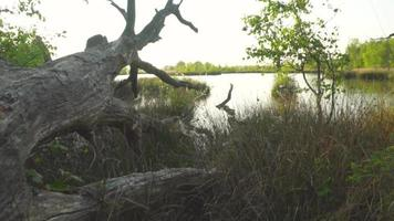 un árbol muerto colgando sobre el río