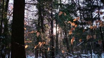 der schöne Sonnenuntergang durch Bäume in einem verschneiten Wald video