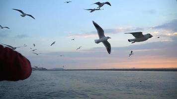Alimentando a las gaviotas desde el ferry en Estambul