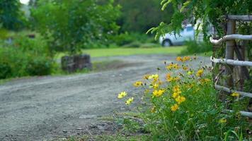 flores do cosmos ao lado da cerca governante de uma fazenda video