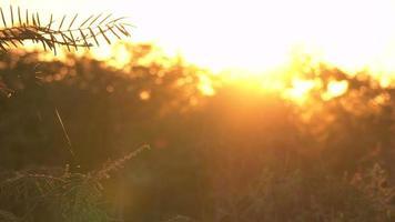Los rayos del sol se reflejan en el árbol y la telaraña. video