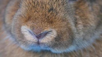 la nariz de un conejo marrón