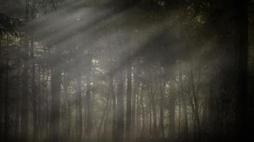 fundo da floresta de manhã cedo