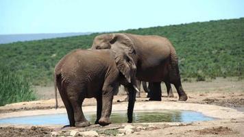 Elephants in Chiangmai, Thailand