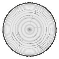 Madera de madera en escala de grises aislado sobre fondo blanco. vector
