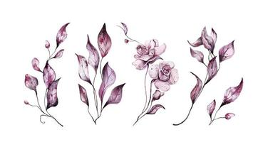 Pink watercolor flowers with leaves vector