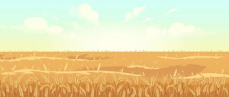 Golden wheat field vector