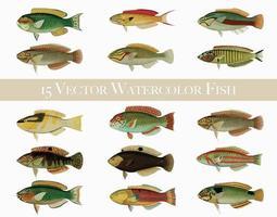 15 Watercolor Fish vector