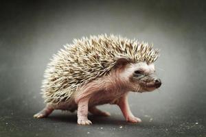 cute hedgehog baby background