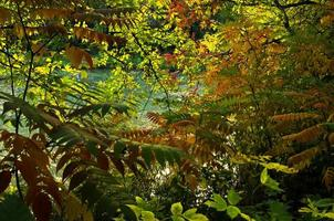 Yellow,orange and green colors of leaves at autumn