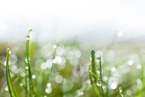 Green nature photo