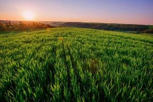 Fondo de gotas de rocío sobre la hierba verde brillante foto