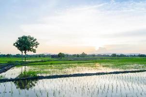 vistas de los campos de arroz en asia foto