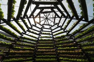 Organic hydroponic vegetable cultivation farm. photo