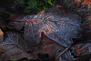 Frozen leavs photo