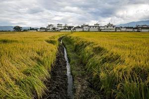 Rural scene of rice fields on plateau in Dali, China.