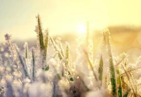 Frozen grass at sunrise close up. photo