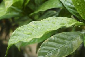 Rain Drops on Leaf - Stock Image photo