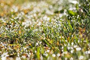 drops of dew on grass