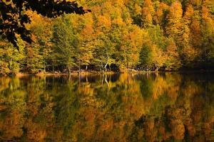 Fall Trees at Lake Edge of Yedigoller photo