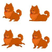 Spitz dog in different poses vector