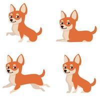 chihuahua en diferentes poses. vector