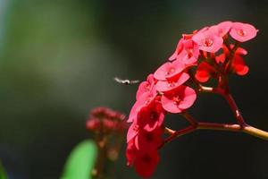 Bee lands on a red flower photo