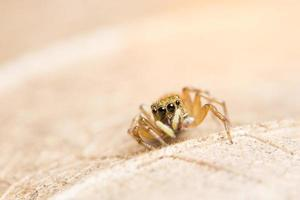 Spider on a leaf, close-up