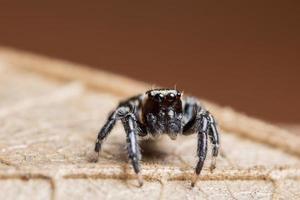 Araña macro sobre una hoja seca