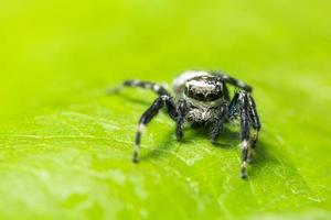 araña en una hoja verde foto