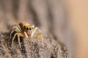 macro araña en un árbol