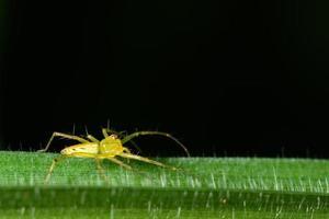 araña en una planta verde