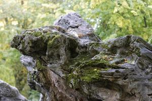 Irregular rock with moss in the forest